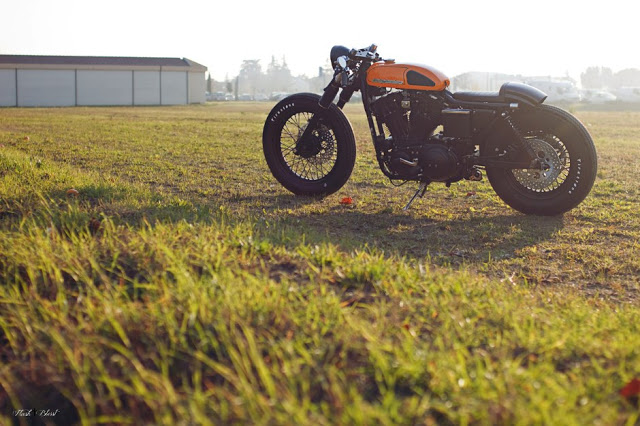 Return of the Cafe Racers - Harley Davidson 883 by Simone Flash Benedetti